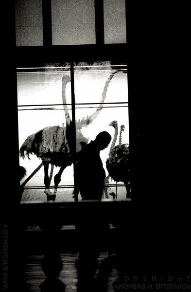 A strange animal, Vienna 2015