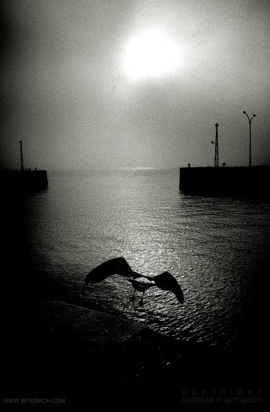 Andreas_H_Bitesnich-Bird_on_the_shore_of_Tagus_River-Lisbon-2019_4139
