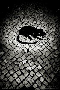 Rat, Lisbon 2018