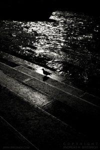 Bird by the Seine, Paris 2012