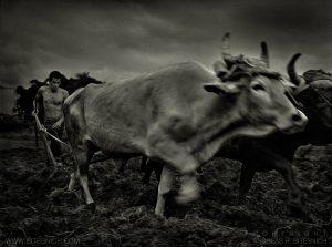 Farmer, Cuba 1999