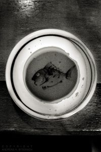 Fish bowl, Tokyo, Japan 2012