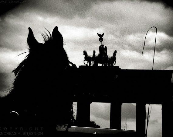 Five horses, Berlin 2017