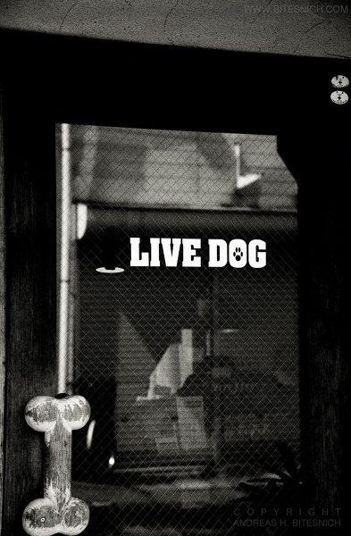 Live Dog, Tokyo, Japan 2012