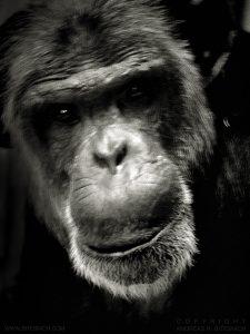 Monkey, Berlin 2017