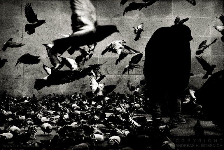 The Birds, Paris 2013